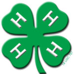 4-H Camp in the City