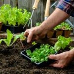 Two free gardening classes Return to MLK Park