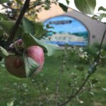 Apple Madness: A Kingfield Family Playdate